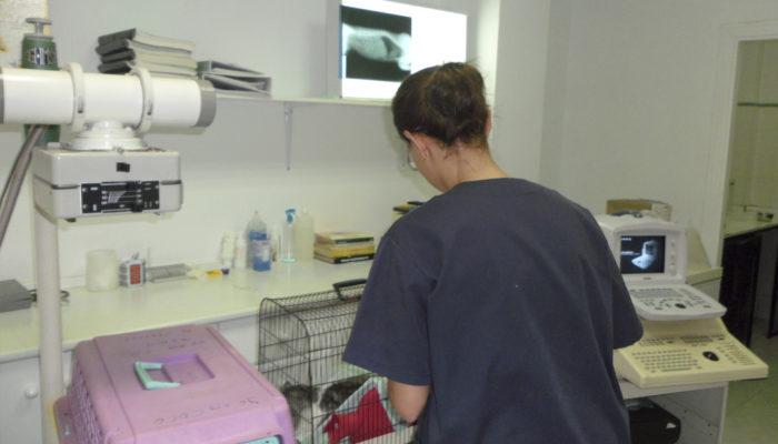 servicios veterinaria saladar