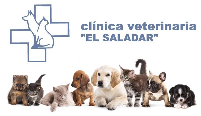 Clinica Veterinaria en el Saladar